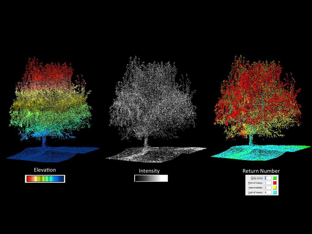 LiDAR Analysis Stem Count of Almond Tree Orchard
